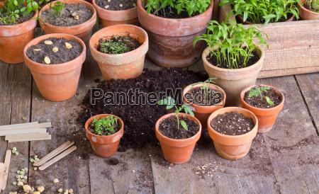 pflanzen - 8970972
