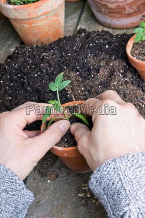 pflanzen - 8971340