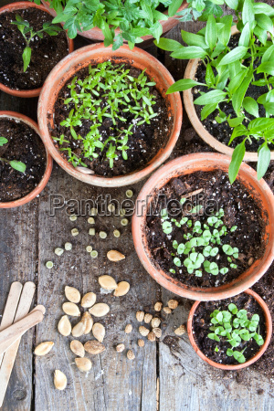 garden plant green wood spring sperm