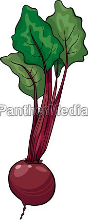 beet vegetable cartoon illustration