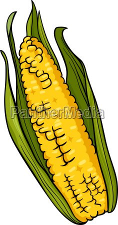 corn on the cob cartoon illustration