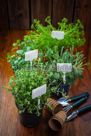verschiedene kraeuter zum anpflanzen