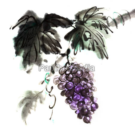 chinese traditional ink painting of grapes