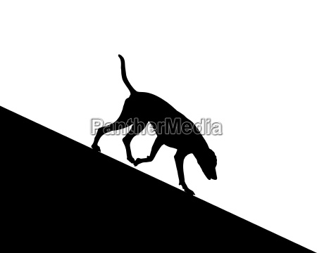 hund laeuft bergab