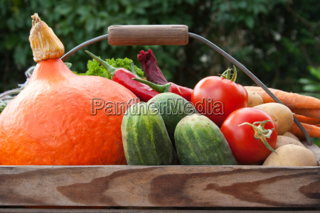 vegetable courgette tomato cucumbers carrots onion