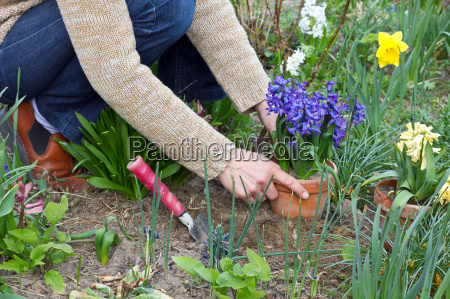 blue hand hands plant flower spring