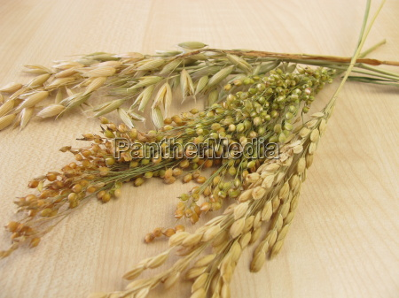ferrisps rice risps and millet isps