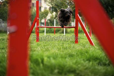 animale animali cane saltare balzare saltellare