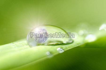 hoja medio ambiente globo tierra sostenible