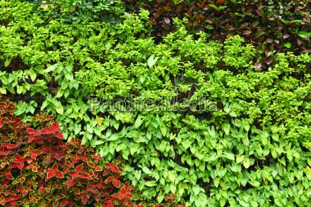 pflanzen, wand - 9150328