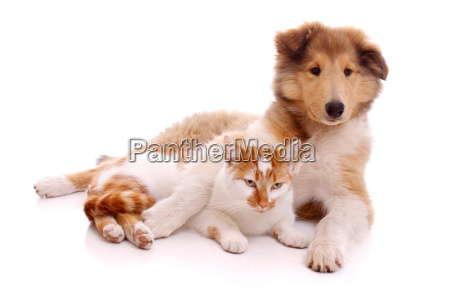 dog and cat lying