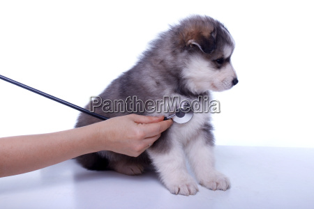 investigation of puppies at the vet