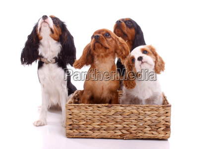 four puppies looking up