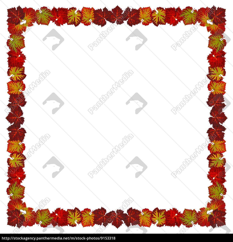 Rahmen mit Weinlaub im Quadrat Format - Stockfoto - #9153318 ...