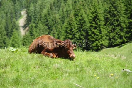 high alm alm economy alm pasture