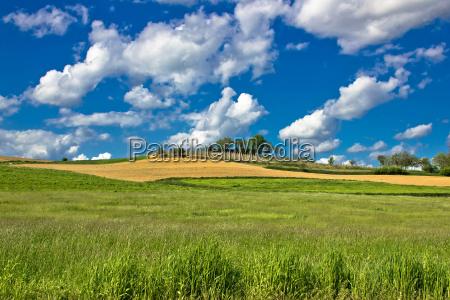 gruene natur sceenery unter blauem himmel