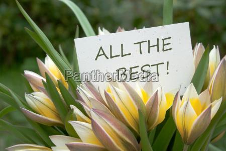 tulips yellow congratulate congratulations wedding anniversary