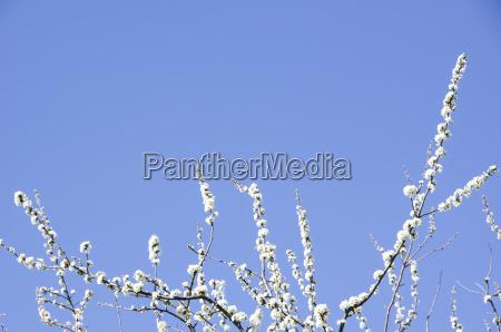 blau blume pflanze bluete erbluehen bluehen