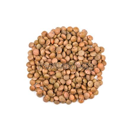 indemnified lentils