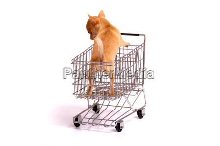 puppy in the shopping cart