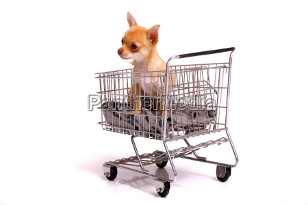 seated puppy in shopping cart