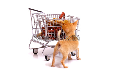 puppy looks into cart