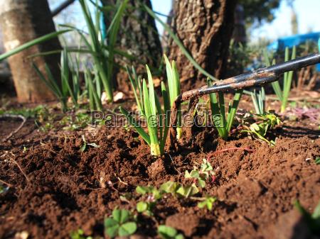 garten blume pflanze schnitt halm schneiden