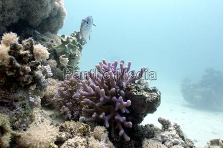 fisch unterwasser exotisch kunstspringen tauchend salzwasser
