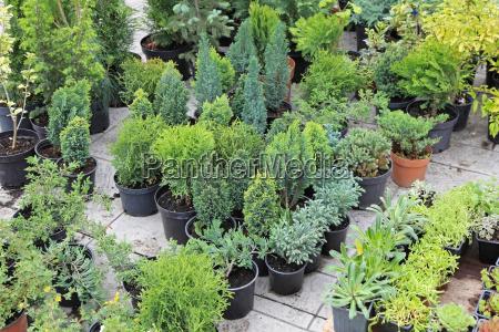 evergreen, pflanzen - 9491124