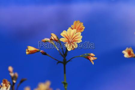 blueten orange