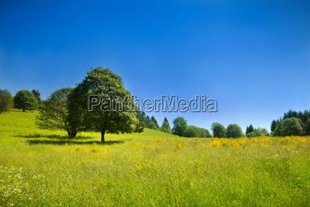 idyllische, ländliche, szene, mit, grüner, wiese - 9539504