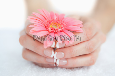 french manicured hands holding flower