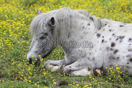 pony on the flower field