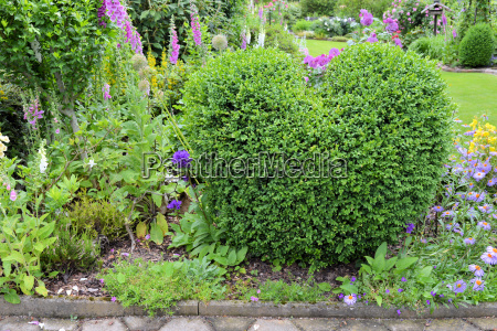 boxwood in heart shape in the