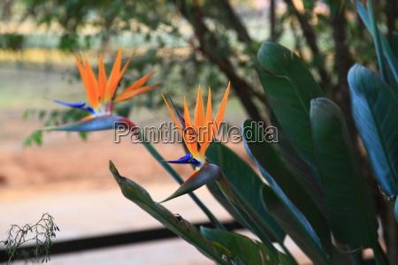 blue flower plant ginger orange