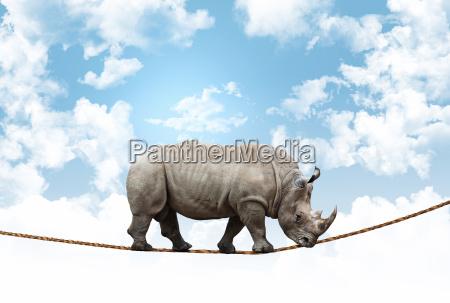 acrobat rhino