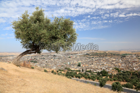 tree over the old medina of
