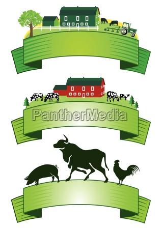 viezucht landwirtschaft