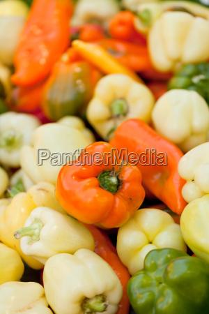 rote gelbe gruene paprika makro nahaufnahme