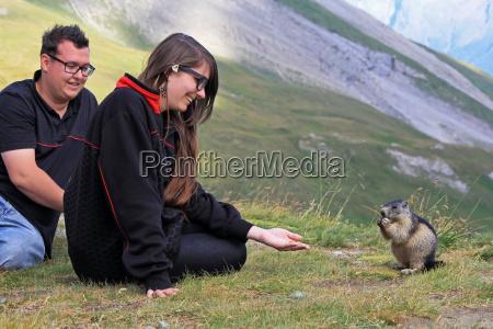 a confiding marmot