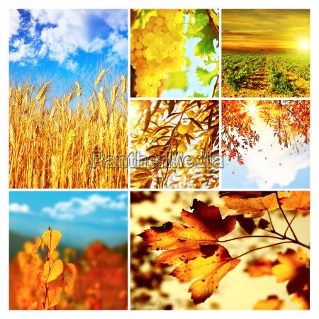 autumn nature collage