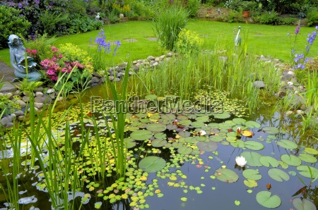 garden pond with lily pads