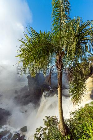 palme mit wasserfall