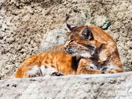garten tier fauna sommer sommerlich tierpark