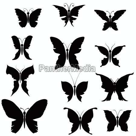 schwarze silhouetten von schmetterlingen