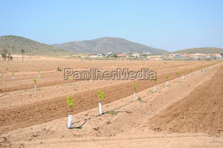 spanien neue orangenplantage
