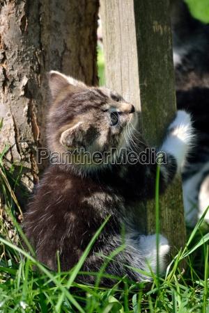 kleine verspielte katze
