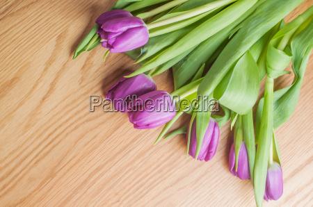 violette tulpen auf dem holz