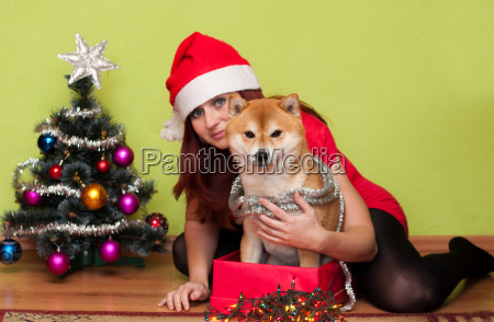 beautiful puppy with christmas decorations