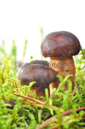 food aliment isolated moss mushroom fungus